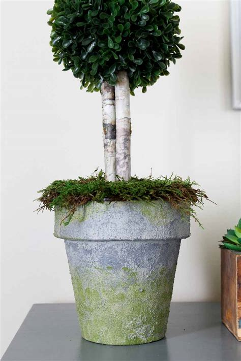 Diy Pot Topiary Project With Faux Concrete  Consumer Crafts