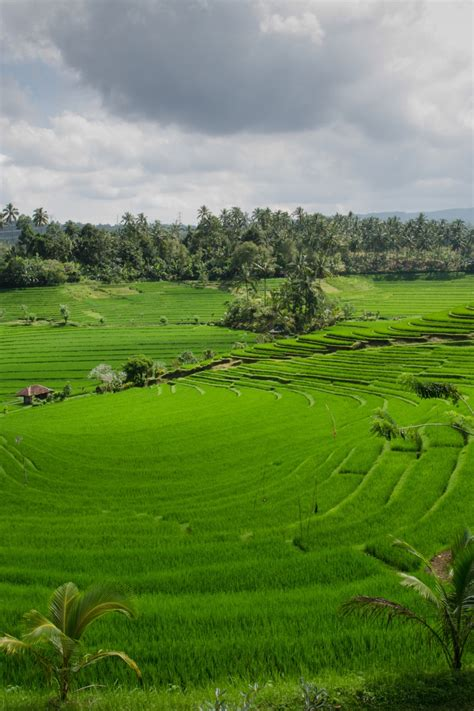 stock photo  agriculture asia bali