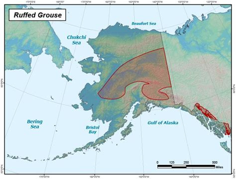 ruffed grouse range map alaska department  fish  game