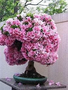 Rosa Blüten Baum : bonsai baum rosa bl ten kleine g rten ideen geeignet bonsai ~ Yasmunasinghe.com Haus und Dekorationen