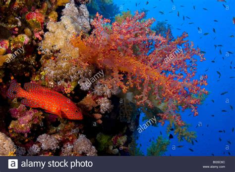 Red Sea Coral Reefs Underwater Tropical Reef Colorful