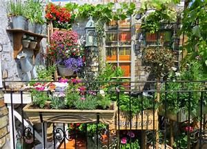 Jardin Et Balcon : plantes balcon choisir accueil design et mobilier ~ Premium-room.com Idées de Décoration