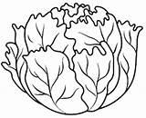 Coloring Lettuce Lechuga Frutas Vegetable Colorear Fruits Dibujos Coliflor Vegetables Imprimir Colorir Desenhos Criancas Legumes Paginas Libri Leek Orto Riscos sketch template