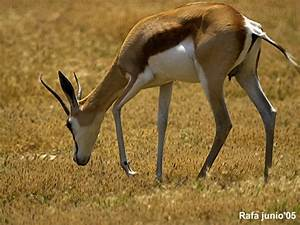 Fotografias, imagenes > Animales Fauna Terrestre