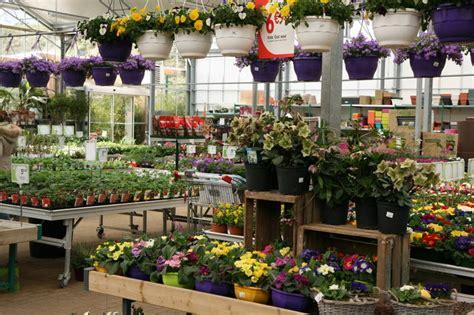 plante exterieur toute saison plantes d ext 233 rieur jardinerie l esprit jardiland ecole