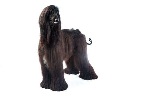 dog breeds purina new zealand purina
