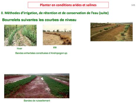 for 234 t jardin climat aride association bdk projet elzeard
