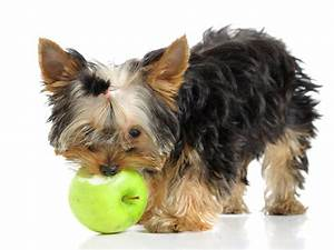 what are some foods safe to feed pets