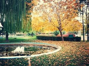 Iran, Kermanshah, Fall, Trees, Nature, Wallpapers, Hd