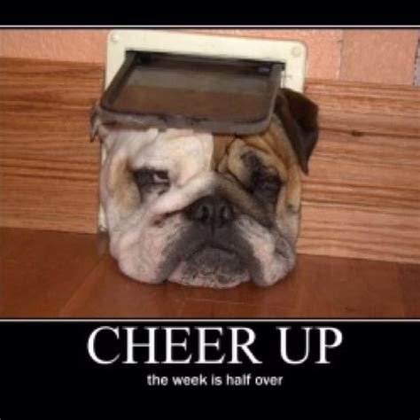 Funny Cheer Up Meme - cheer up meme pictures to cheer you up