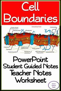 Cell Boundaries  Powerpoint  Illustrated Student Guided