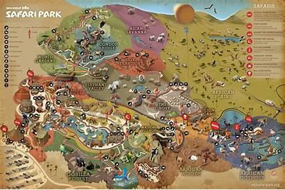 Safari Diego San Park Map Zoo Maps