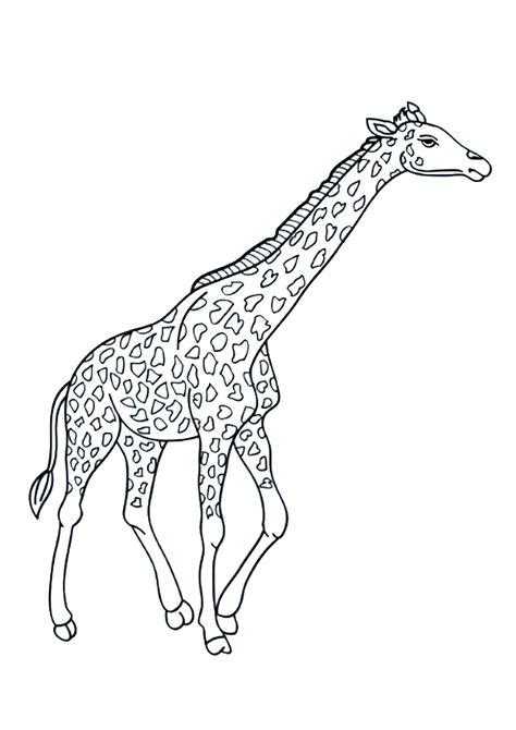 disegni  giraffe da colorare pianetabambiniit