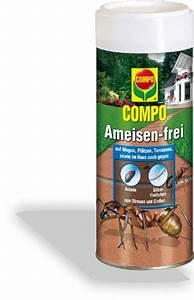 Ameisen Im Gewächshaus : ameisen frei compo ~ Lizthompson.info Haus und Dekorationen