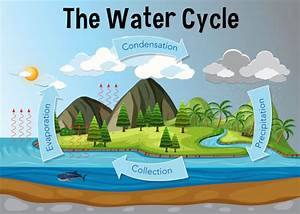 The Water Cycle Diagram Vector