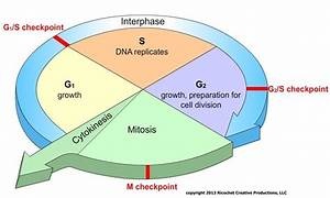 Cell Division  Lesson 0426
