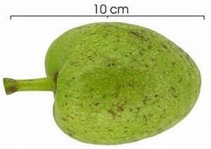 Annona glabra - Pond apple -- Discover Life