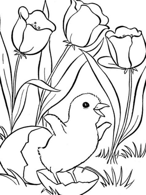 animal coloring pages coloringsuite