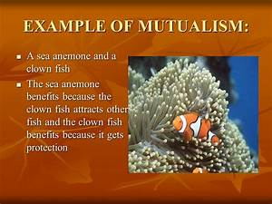 SYMBIOTIC RELATIONSHIPS WORDS ppt video online download