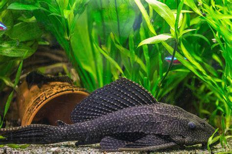 Pet, Reptile, Fish, Fauna, Vertebrate, Wels