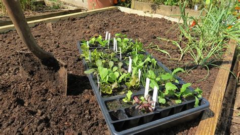 fertilizing vegetable garden a complete guide to a raised bed vegetable garden