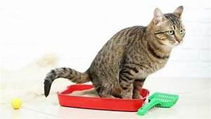 38 Bachbl ten bezogen auf Katzen