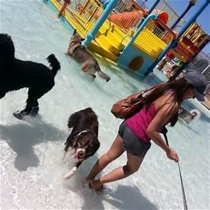 Desert breeze aquatic facility 21 photos 23 reviews for Dog days las vegas