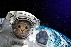 Cat Astronaut In Space On Background Of The Globe Stock ...