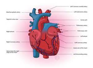Coronary Artery Definition