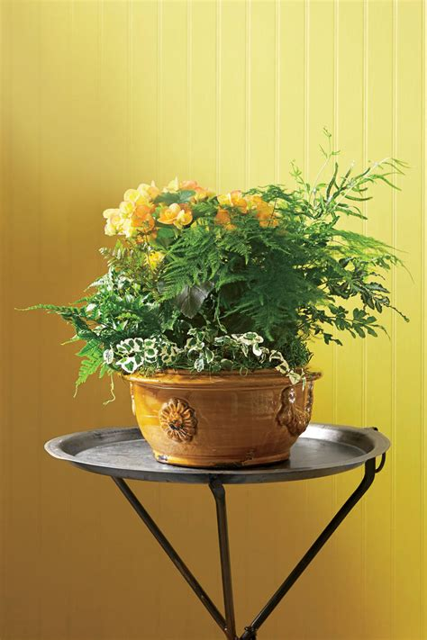 Indoor Container Garden Ideas  Southern Living