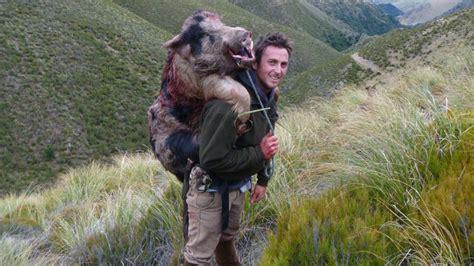 wild boar  seasons safaris  zealand