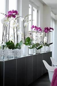 savourez la beaute de la plante dinterieur dans notre With affiche chambre bébé avec plantes vertes a fleurs
