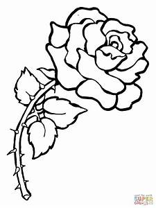 Rose with Thorns coloring page | Free Printable Coloring Pages