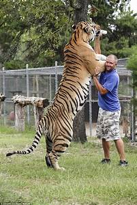 Biggest Siberian Tiger in the World (photo)? - PoC