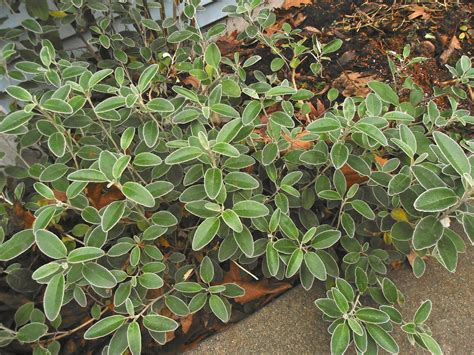 Winter Plants For The Pacific Northwest  That Bloomin' Garden