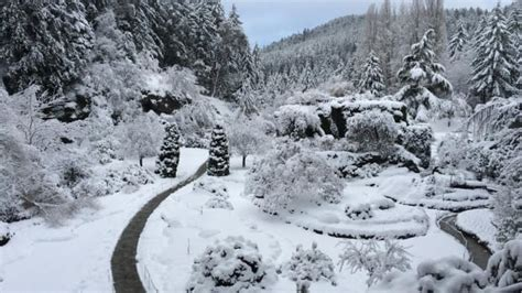 butchart gardens snowjpg