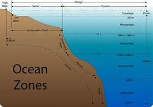 6  10  Aquatic Biomes