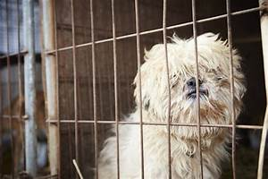 Sad Dogs In Cages