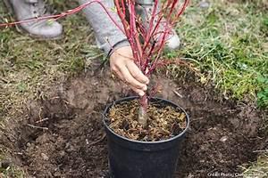 Quoi Planter En Automne : 4 vid os pour r ussir vos plantations d 39 automne maison ~ Melissatoandfro.com Idées de Décoration