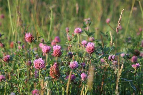 edible wild plants northern wilds