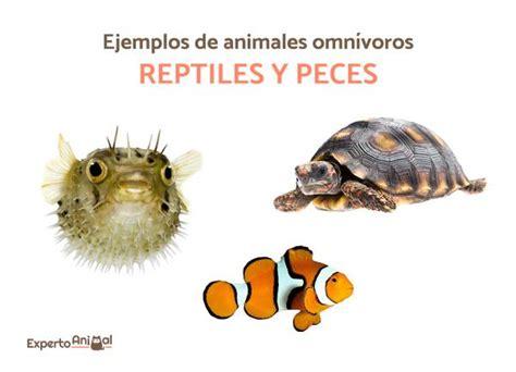 animales omnivoros mas de  ejemplos lista  imagenes