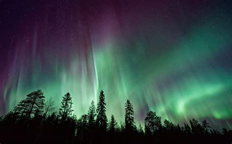 Dark Forest Background With Moon Wallpaper Northern Lights Forest Aurora Borealis 4k 8k Nature 6332
