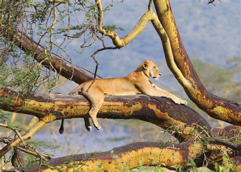kenya wilderness inquiry