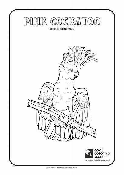 Coloring Pink Cool Pages Cockatoo Animals Colouring