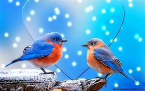 Free Download Images Of Love Birds | Amazing Wallpapers