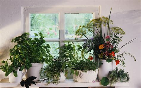 properly fertilize  indoor herb garden