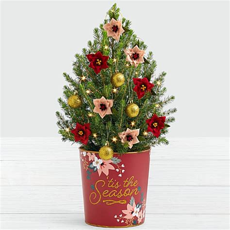 proflowers christmas tree small trees real mini trees for the holidays