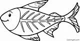 Fish Ray Coloring Coloringall Printable Cartoon Easy Paper Printables Tetra Drawing sketch template