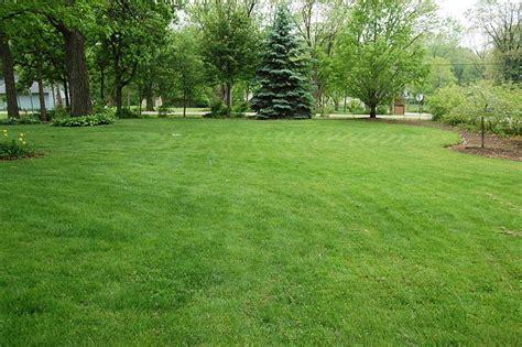backyard picture quiet corner common lawn weeds how to handle them quiet corner