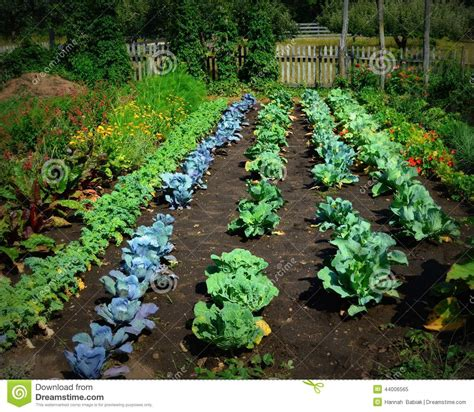vegetable garden stock photo image 44006565